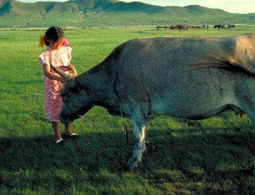 Les vaches l'aiment haute, les moutons l'aiment courte. –  Mongolie