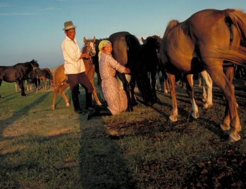 Airag: lait de jument fermenté – Mongolie